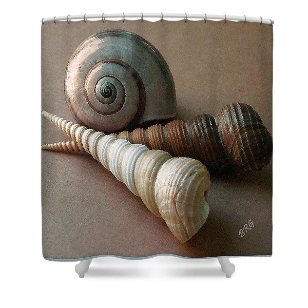 Seashells Spectacular No 29  Shower Curtain