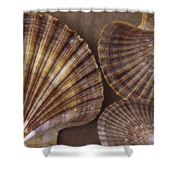 Seashells Spectacular No 7 Shower Curtain