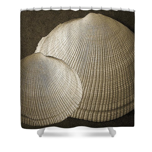 Seashells Spectacular No 8 Shower Curtain