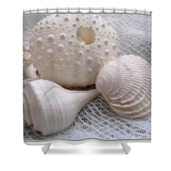 Seashells Study 1 Shower Curtain