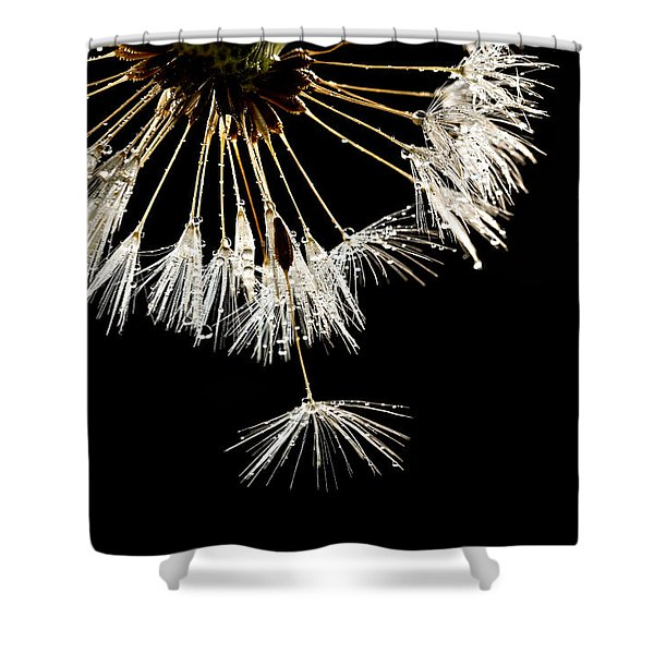 Shower Curtain featuring the photograph Seeking Freedom by Mary Jo Allen