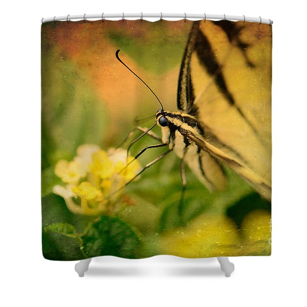 Seeking Sweetness 1 Shower Curtain