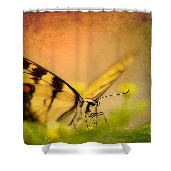 Seeking Sweetness 3 Shower Curtain