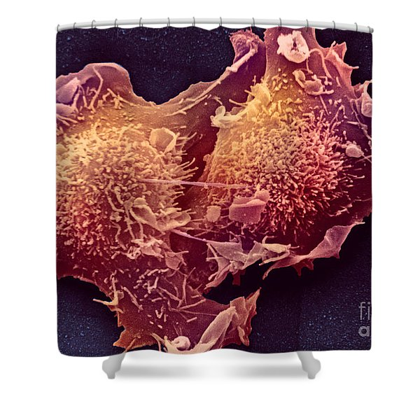 Sem Of Mitosis Shower Curtain