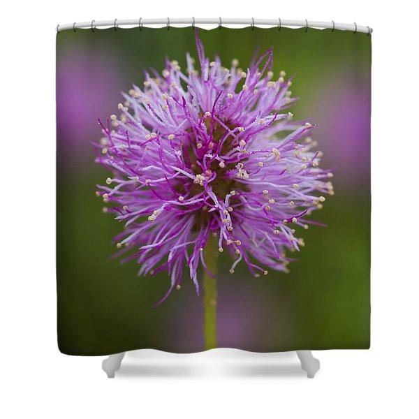 Sensitive Briar Flower Globe Shower Curtain