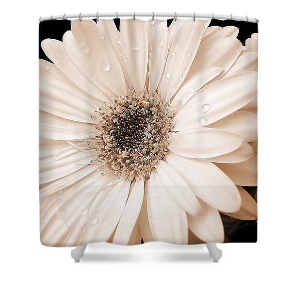 Sepia Gerber Daisy Flowers Shower Curtain