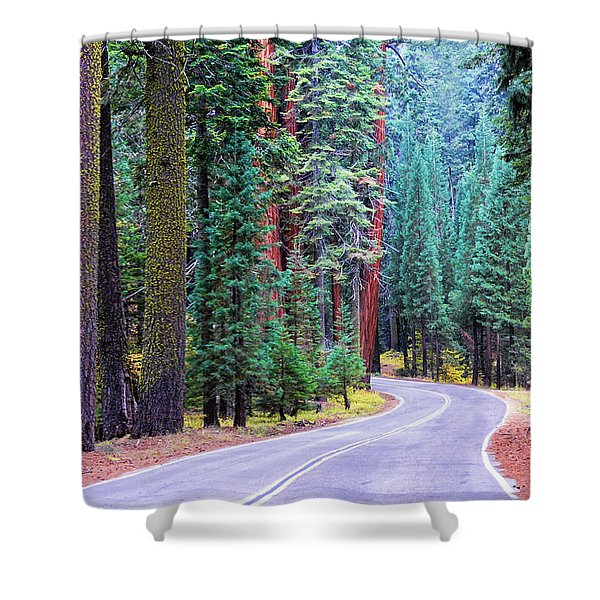Sequoia Hwy Shower Curtain