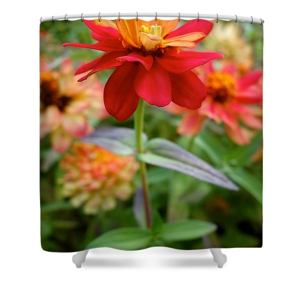 Serenity In Red Shower Curtain