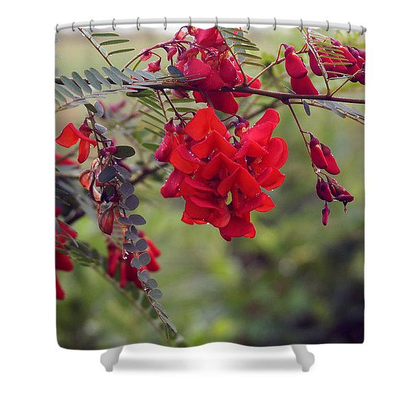 Sesbania Punicea Shower Curtain