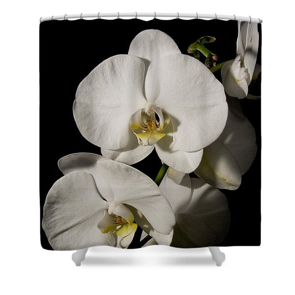 Shadowy Orchids Shower Curtain