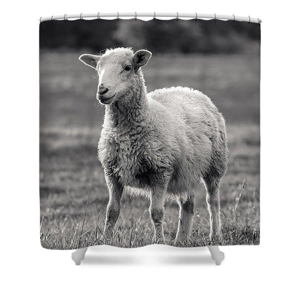 Sheep Art  Shower Curtain