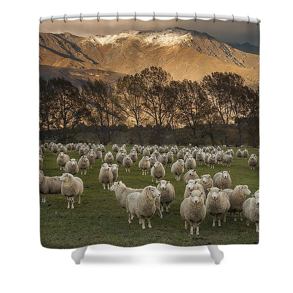 Sheep Flock At Dawn Arrowtown Otago New Shower Curtain