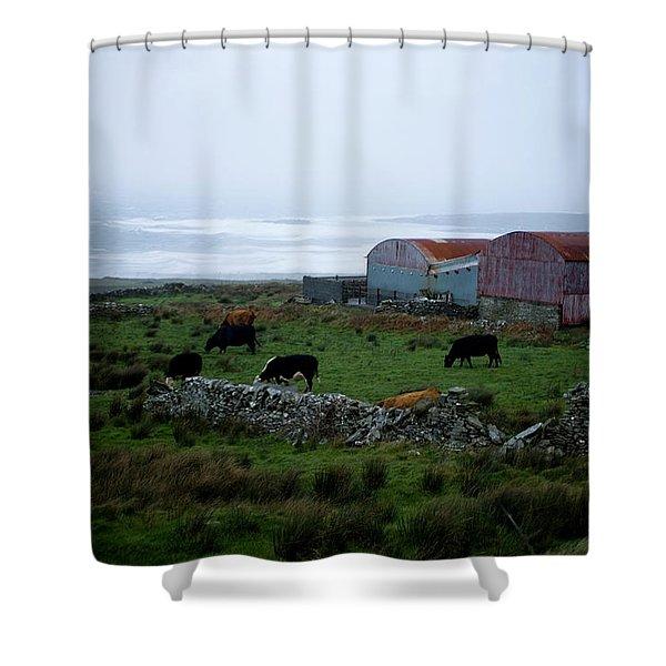 Sheep Grazing In Ireland Shower Curtain