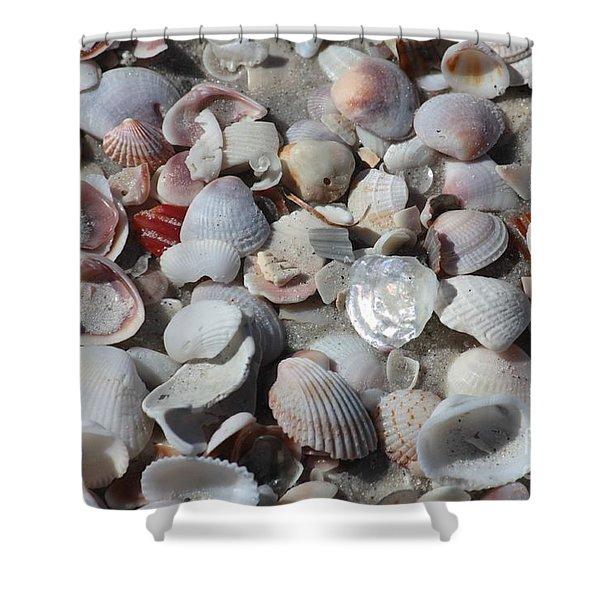 Shells On Treasure Island Shower Curtain