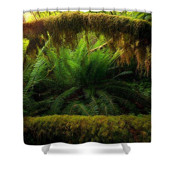 Sheltered Fern Shower Curtain