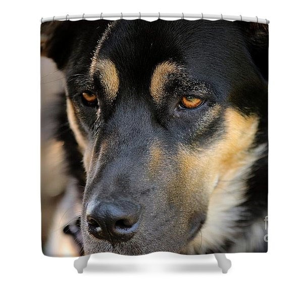 Shepherd Face Shower Curtain