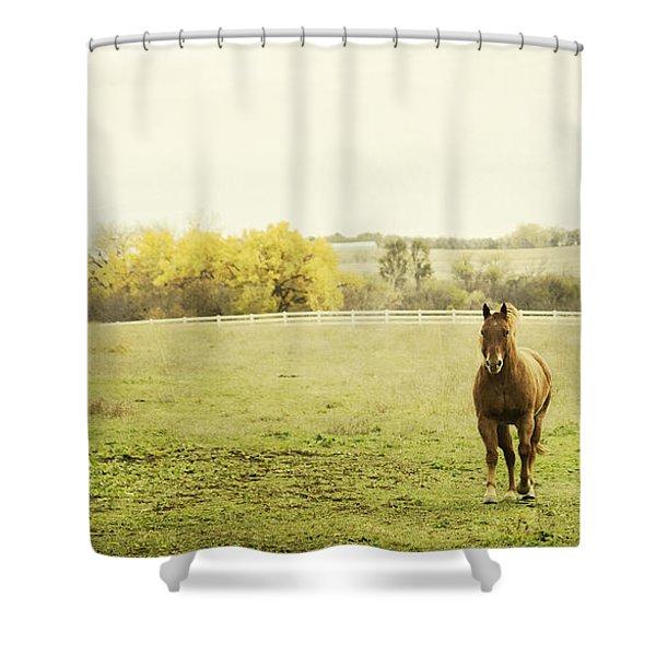 Shiloah On The Run Shower Curtain