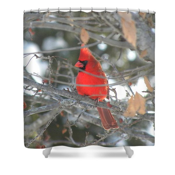Shining Bright Red Shower Curtain