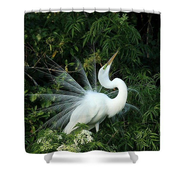 Showy Great White Egret Shower Curtain