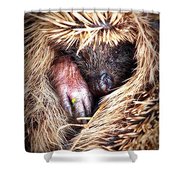 Shy Hedgehog Shower Curtain
