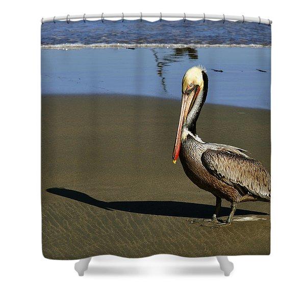 Shy Pelican Shower Curtain