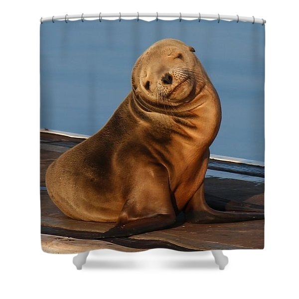 Shy Sea Lion Pup  Shower Curtain