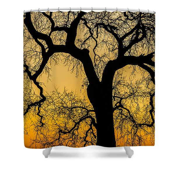 Silhouette Oak Shower Curtain