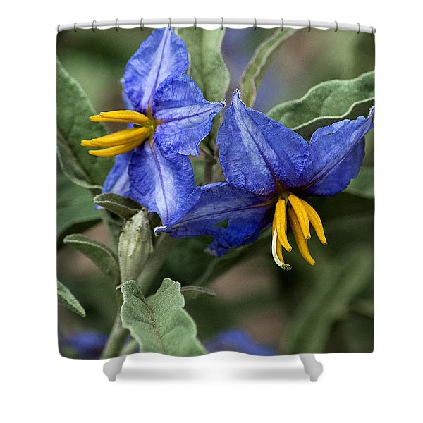 Shower Curtain featuring the photograph Silver Leaf Blooms by Mae Wertz