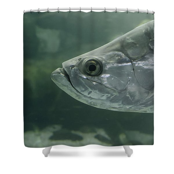 Silver Tarpon Shower Curtain