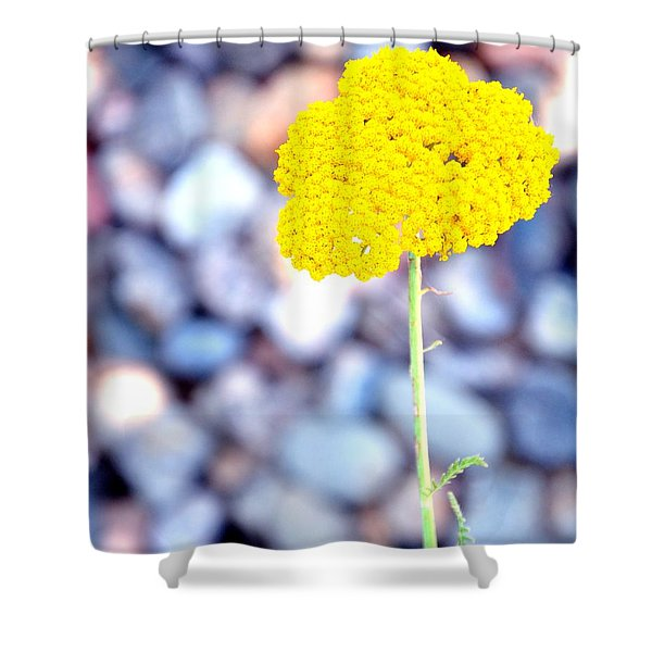 Single 16139 Shower Curtain