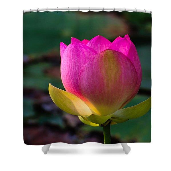 Single Blossum Shower Curtain