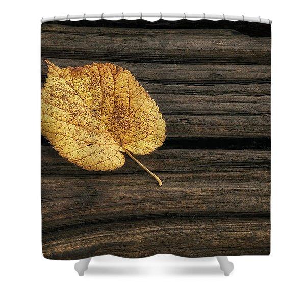 Single Yellow Birch Leaf Shower Curtain