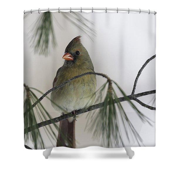 Sitting Pretty Shower Curtain