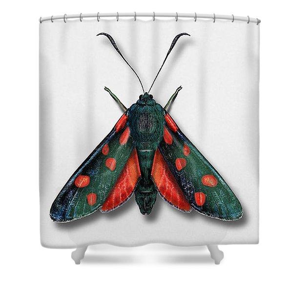 Six Spot Burnet Butterfly - Zygaena Filipendulae Naturalistic Painting - Nettersheim Eifel Shower Curtain