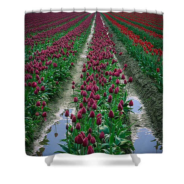 Skagit Valley Tulips Shower Curtain