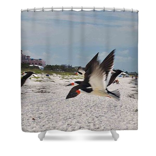 Black Skimmers At Don Cesar Shower Curtain