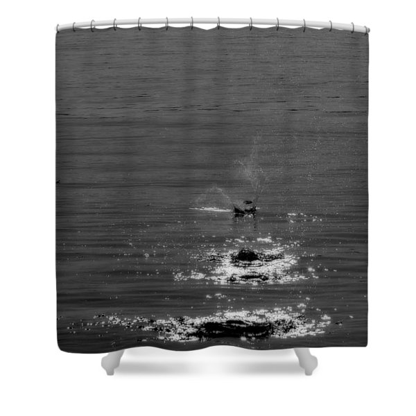 Skipping Stones Shower Curtain