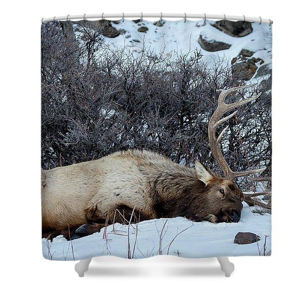 Sleeping Elk Shower Curtain