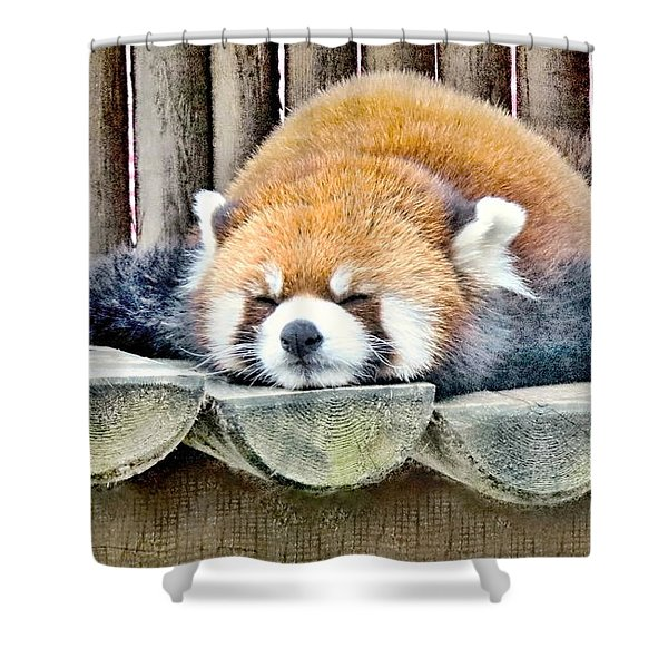 Sleeping Red Panda Bear Shower Curtain