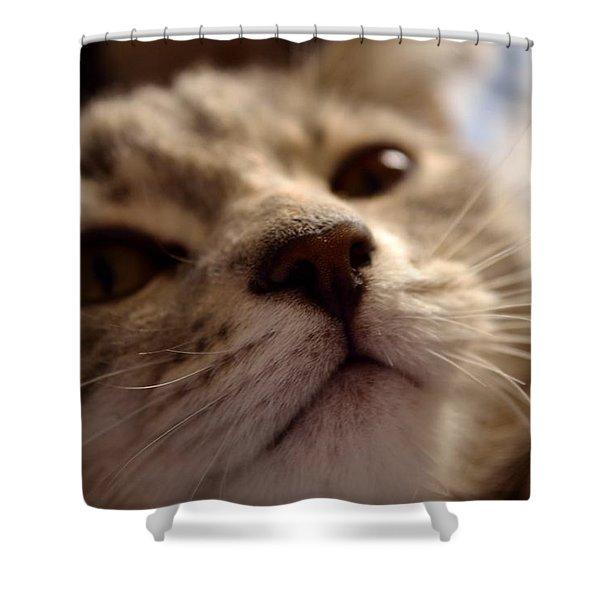 Sleepy Kitten Shower Curtain