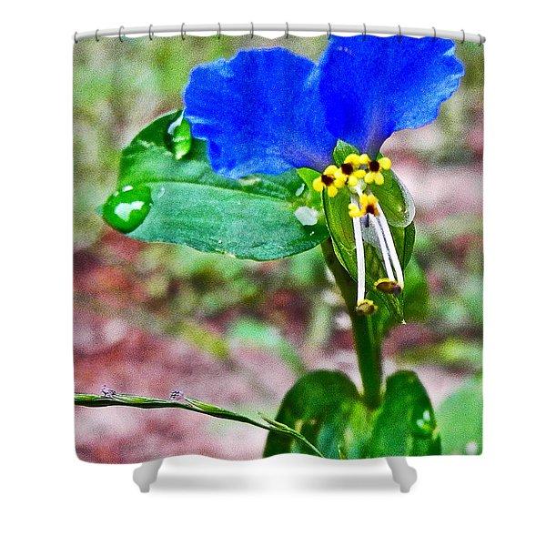 Slender Dayflower In Byron Center-michigan   Shower Curtain