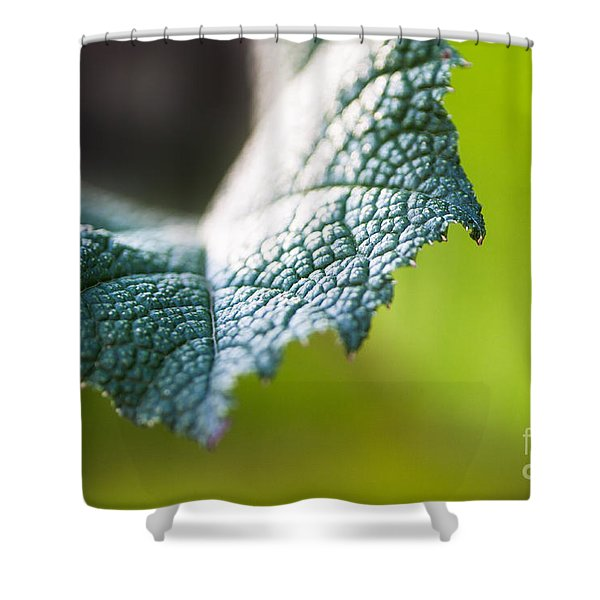 Shower Curtain featuring the photograph Slice Of Leaf by John Wadleigh