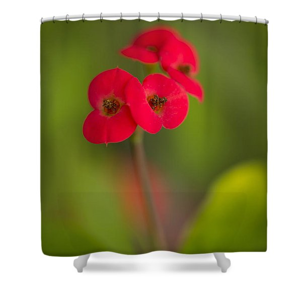 Shower Curtain featuring the photograph Small Red Flowers With Blurry Background by Jaroslaw Blaminsky