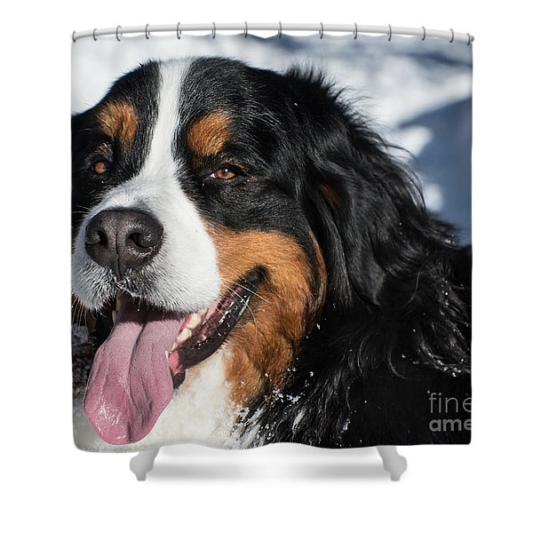 Smiling Bernese Mountain Dog In Winter Snow Shower Curtain