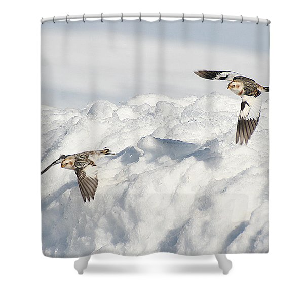 Snow Buntings In Flight Shower Curtain