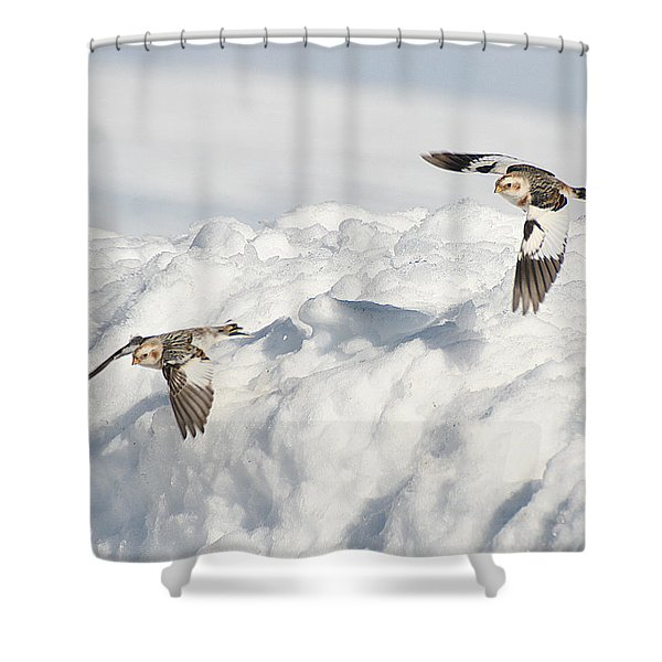 Shower Curtain featuring the photograph Snow Buntings In Flight by William Selander