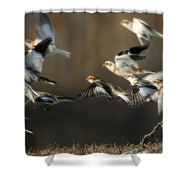 Snow Buntings Taking Flight Shower Curtain