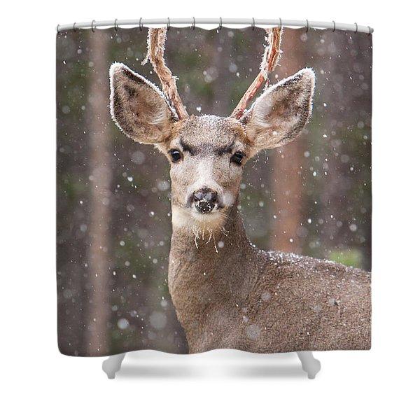 Shower Curtain featuring the photograph Snow Deer 1 by John Wadleigh