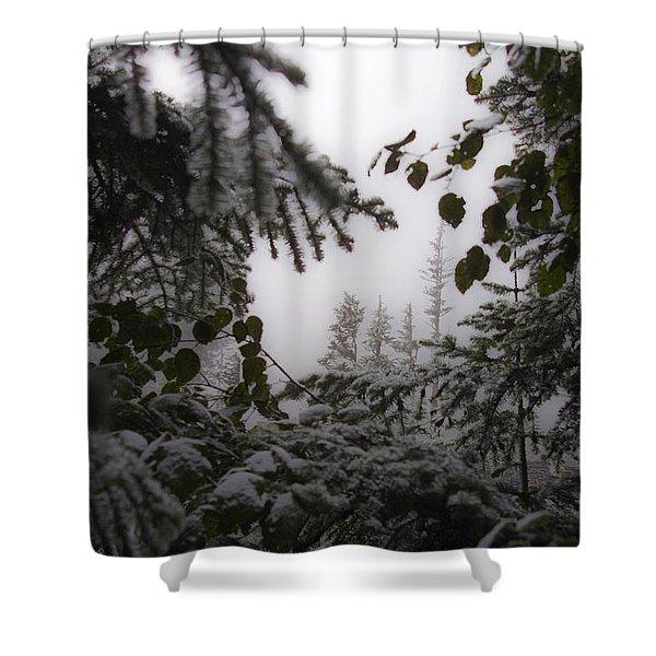 Snow In Trees At Narada Falls Shower Curtain