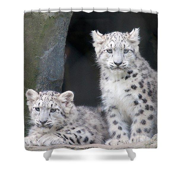 Snow Leopard Cubs Shower Curtain